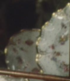 Close up of China in cabinet behind Lizzy