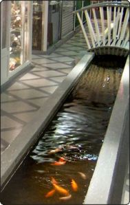 Tributary of the Tyburn with goldfish