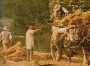 harvest 3 (2)