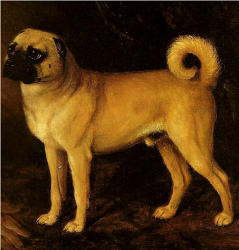 Pugalicious The Pug In Mansfield Park And The 19th