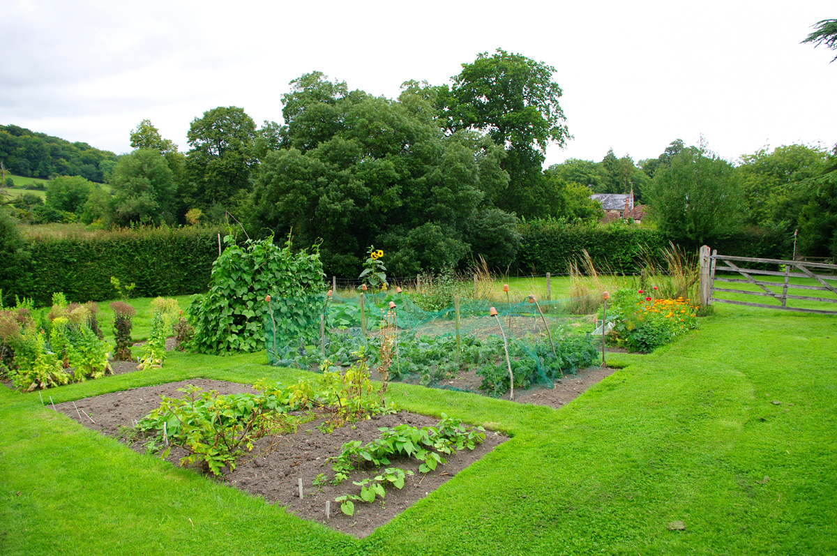 Gilbert white naturalist jane austen 39 s world for Vegetable garden