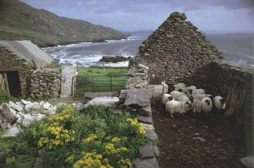 Irish sheep farm. Image @kid's encyclopedia