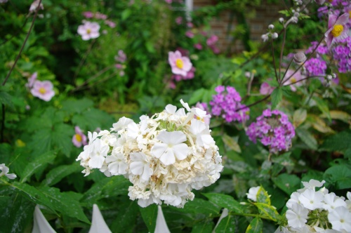 Jane described the syringa in the garden. Image@Tony Grant