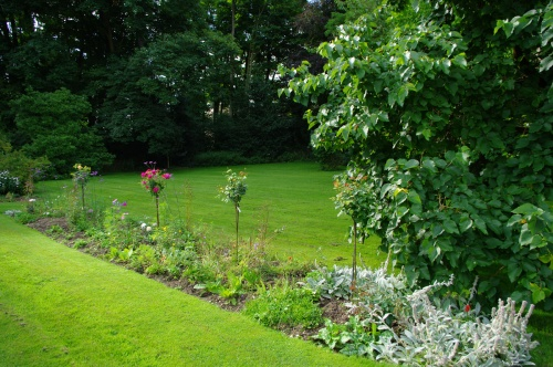Standard roses. Chawton Cottage Image@Tony Grant