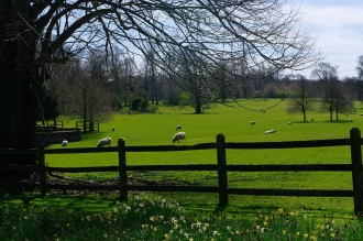 Image of field with sheep, Chawton House, Tony Grant