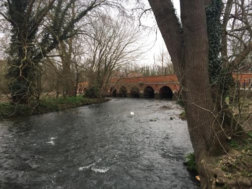 The river mole at leatherhead