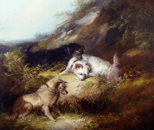 george_armfield_a2792_terriers_rabbiting