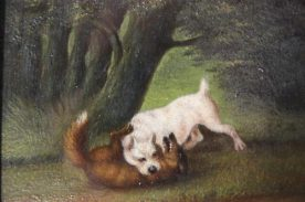 Fox terrier killing a fox