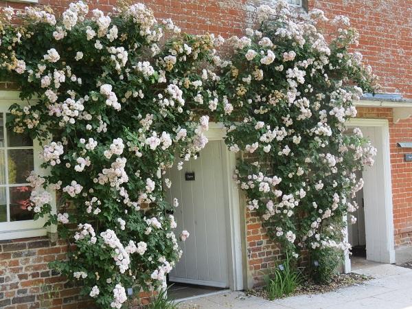Image 8 Roses Entrance