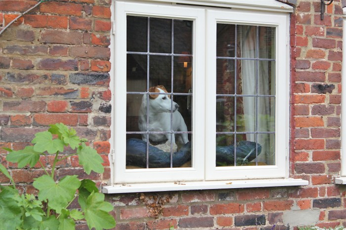 A Jack Russell terrier views Chawton Cottage from a house across the street. Image courtesy of Susan Branch.