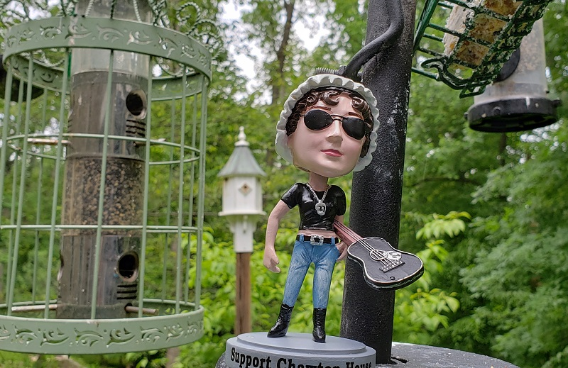 Image of Bad Ass Jane at the bird feeders