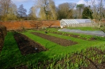 (Photo LL) The Kitchen gardens at The Vyne